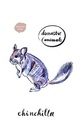 Watercolor funny face grey domestic chinchilla, hand drawn, vector illustration