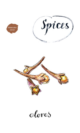 Watercolor dry cloves, carnation, spices, hand drawn, vector illustration