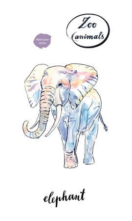 Watercolor african elephant, hand drawn, vector illustration