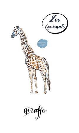 Giraffe made in watercolor, hand drawn, vector illustration