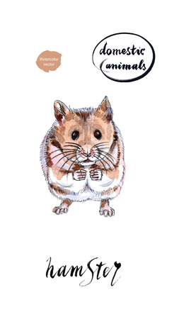 Watercolor small sitting hamster with lifted pads, hand drawn, vector illustration