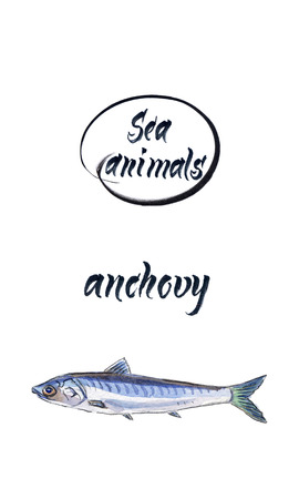 Fresh anchovy, marine atlantic ocean anchovy or sea anchovy fish species.  Watercolor, hand drawn - illustration Stock Photo