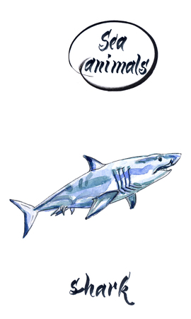 Watercolor shark on the white background. Watercolor shark sketch, hand drawn, watercolor illustration