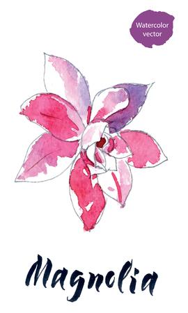 Flower of magnolia watercolor hand drawn illustration.
