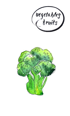 Green fresh and raw broccoli - hand drawn watercolor illustration Stockfoto