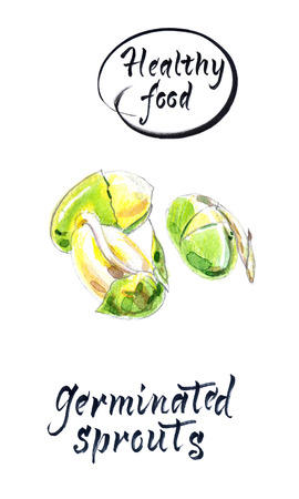 Sprouting seeds, watercolor hand drawn illustration Stock Photo