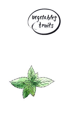 Twig of green and fresh mint, watercolor hand drawn illustration, raster illustration