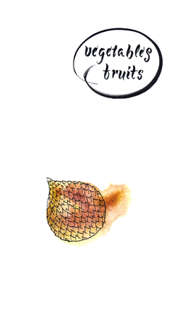 Salacca zalacca or Salak fruits. Snake fruit is sweet and sour fruit, Thailand fruits. Watercolor illustration 写真素材