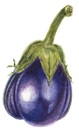 Fresh Eggplant vegetable with stem or aubergine - watercolor vector botanical illustration
