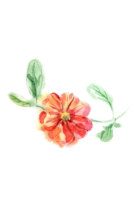 Watercolor vector botanical illustration hand painted petunia flower