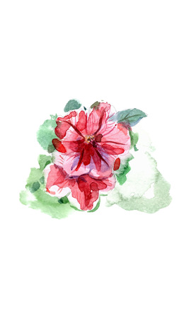 Watercolor hand painted petunia flower, vector botanical illustration Stock Illustratie