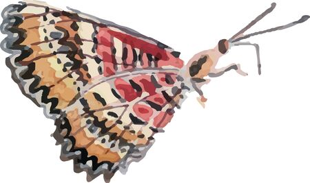 Watercolor butterfly, hand drawn illustration