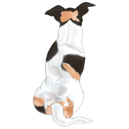 Watercolor illustration, Jack russel, breed of dog, vector illustration