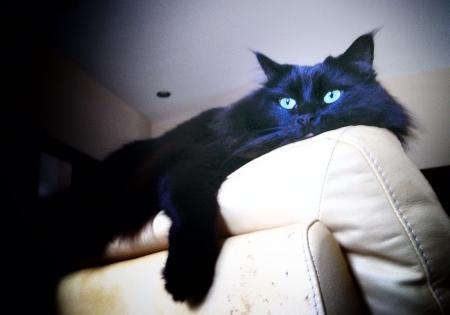 lounging: Lounging cat Stock Photo