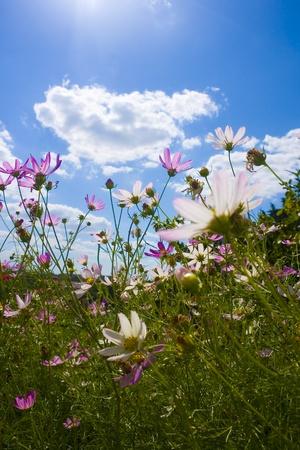 flowers on blue sky background photo