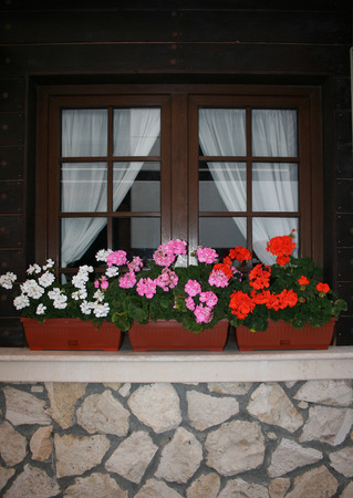 window with flowerpots photo