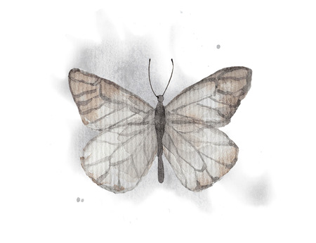 Vintage butterfly on watercolor splotches. Watercolor hand drawing illustration Stok Fotoğraf
