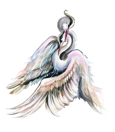 A pair of cranes on white background. Watercolor hand drawn illustration