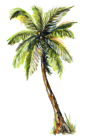 Palm tree isolated on white background. Watercolor hand drawn illustration