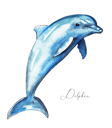 Dolphin isolated on white background. Watercolor hand drawn illustration