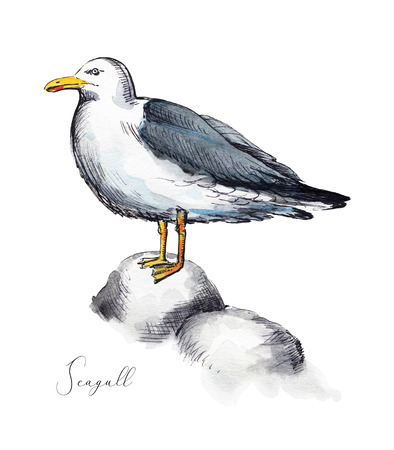 Seagull stands on stones isolated on white background. Watercolor hand drawn illustration Stock Photo
