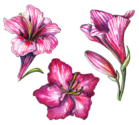 Set with three tropical pink flower on white background. Watercolor hand drawn illustration