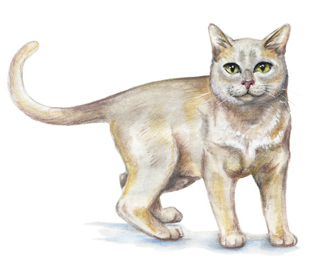 Picture of a Burmese cat in white background. Watercolor hand painted illustration Imagens