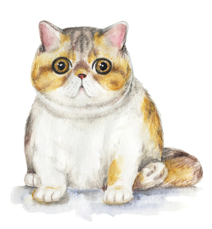Picture of a Exotic cat in white background. Watercolor hand painted illustration Stock Photo
