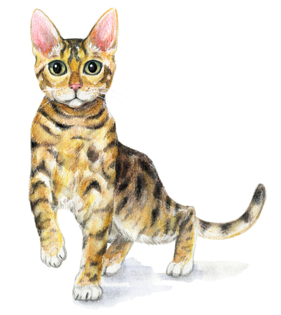 Picture of a Bengal cat in white background. Watercolor hand painted illustration