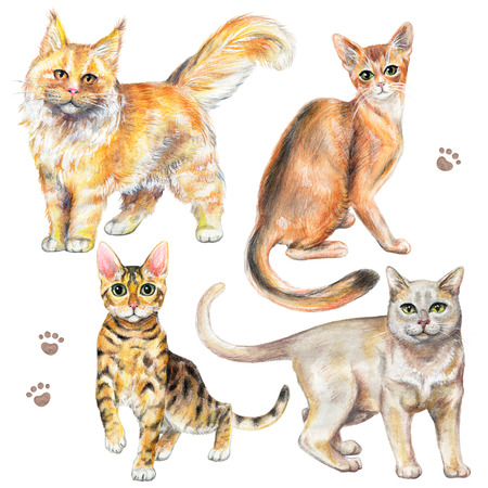 Set with four different breeds of cats isolated on white background. Watercolor pencils hand drawn illustration Фото со стока