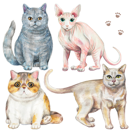 Set with four different breeds of cats isolated on white background. Watercolor pencils hand drawn illustration Imagens