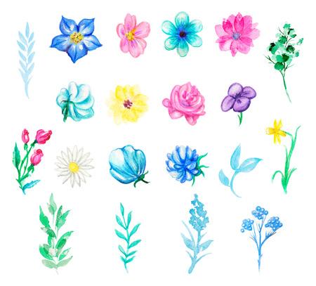 Vintage set with twenty  plant elements. Watercolor pencils hand drawn illustration