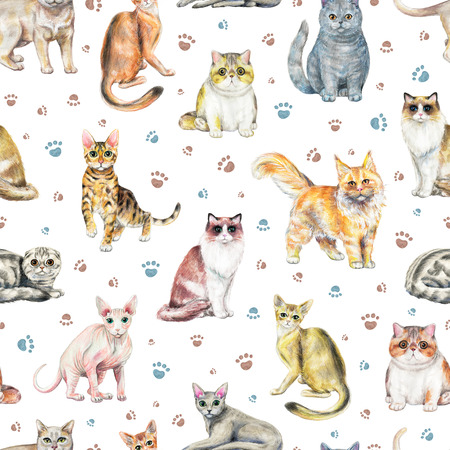 Seamless pattern with ten different breeds of cats and footprints isolated on white background. Watercolor pencils hand drawn illustration Фото со стока