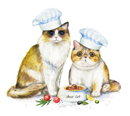 Composition with two cats in chefs caps, bowl with food and vegetables. Watercolor pencils illustration isolated on white background