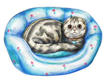 Composition with scottish fold cat on pet bed on white background. Watercolor pencils hand drawn illustration