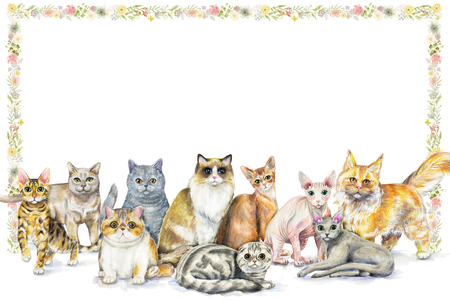 Frame composition with ten different breeds of cats and floral framing on white background. Watercolor pencils hand drawn illustration