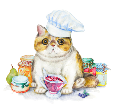 Composition with exotic cat in chefs cap, jars of jam and fruit. Watercolor pencils illustration isolated on white background Stok Fotoğraf