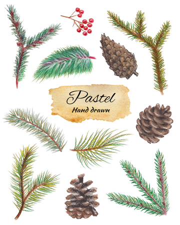 Set with spruce branches, cones and mountain ash isolated on white background. Pastel hand drawn illustration