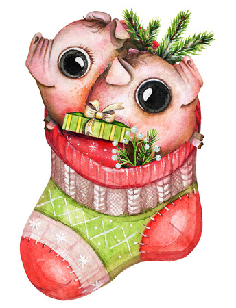 Christmas red sock with two small piglets, gift box and branches isolated on white background. Watercolor hand drawn illustration
