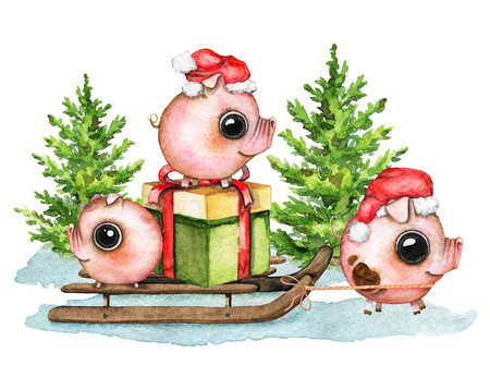 Christmas composition with three small piglets, gift box, sleigh, snow and two Ð¡hristmas trees isolated on white background. Watercolor hand drawn illustration
