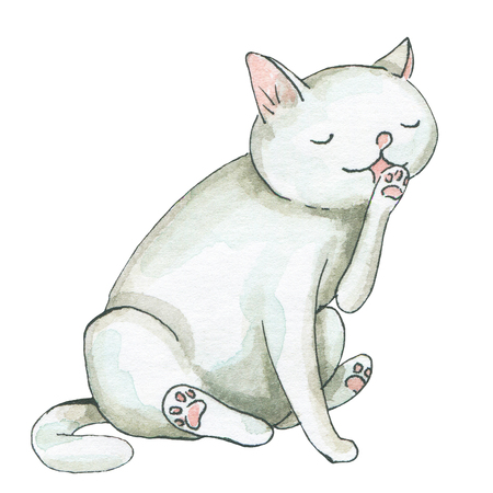 White cat licks itself isolated on white background. Watercolor hand drawn illustration
