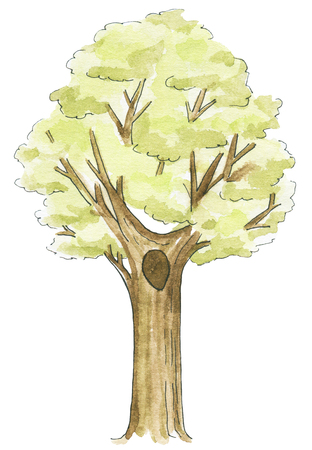 Tree isolated on white background. Watercolor hand painted illustration