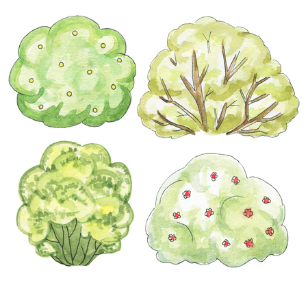 Set of four various bushes isolated on white background. Watercolor hand drawn illustration Imagens