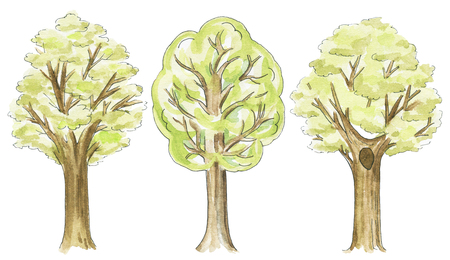 Set of three various trees isolated on white background. Watercolor hand drawn illustration
