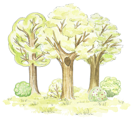 Composition of three various trees, grass and bushes isolated on white background. Watercolor hand drawn illustration