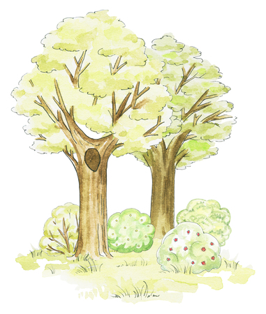 Composition of two various trees, grass and bushes isolated on white background. Watercolor hand drawn illustration