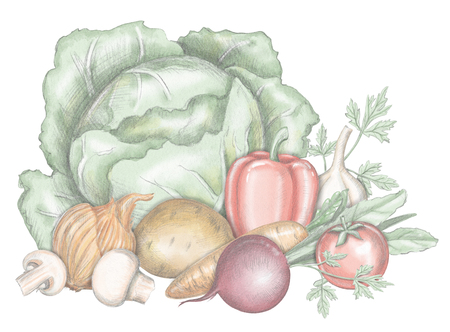 Composition with cabbage, beet, pepper, greens, tomato, garlic, onion, mushrooms potato isolated on white background. Lead pencil graphic and digital illustration