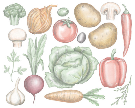 Big set with various fresh vegetables isolated on white background. Lead pencil graphic and digital illustration
