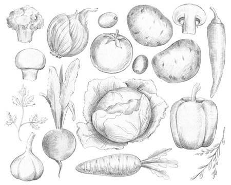 Big set with various fresh vegetables isolated on white background. Lead pencil graphic and illustration