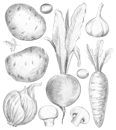 Vegetable set with mushrooms, potatoes, beet, carrot, garlic, olives, greens and onion isolated on white background. Lead pencil graphic illustration